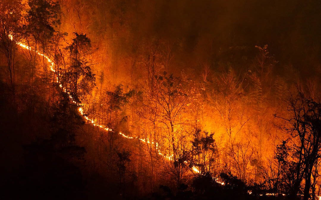 Catastrophe Alert: Wildfires Rage in the Western United States