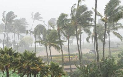 Florida Insurance Adjusters Brace for Tropical Storm Eta