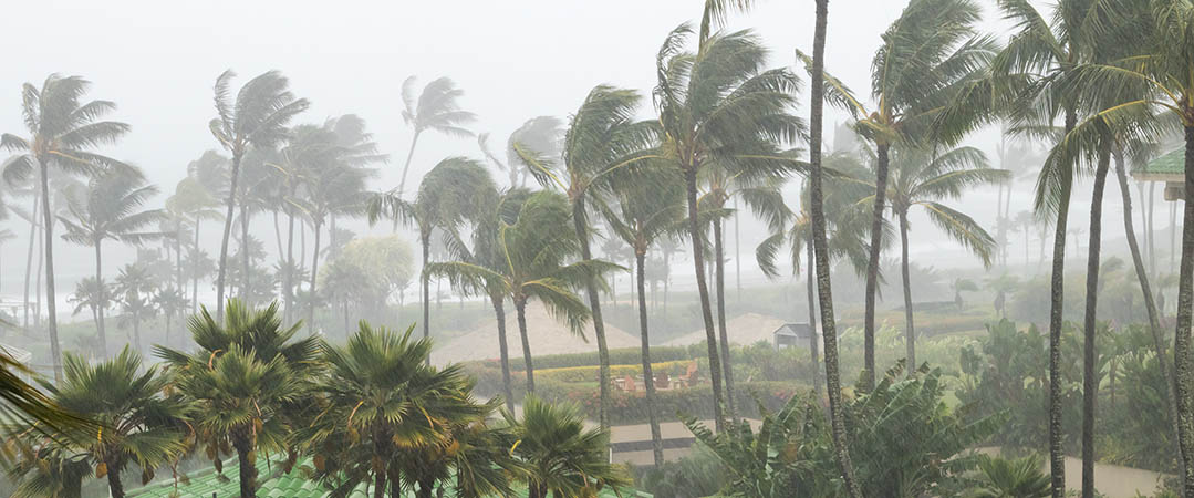 Palm trees blowing in a strong wind with rain falling