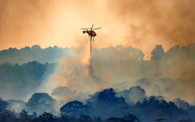 Year In Review: Wildfires